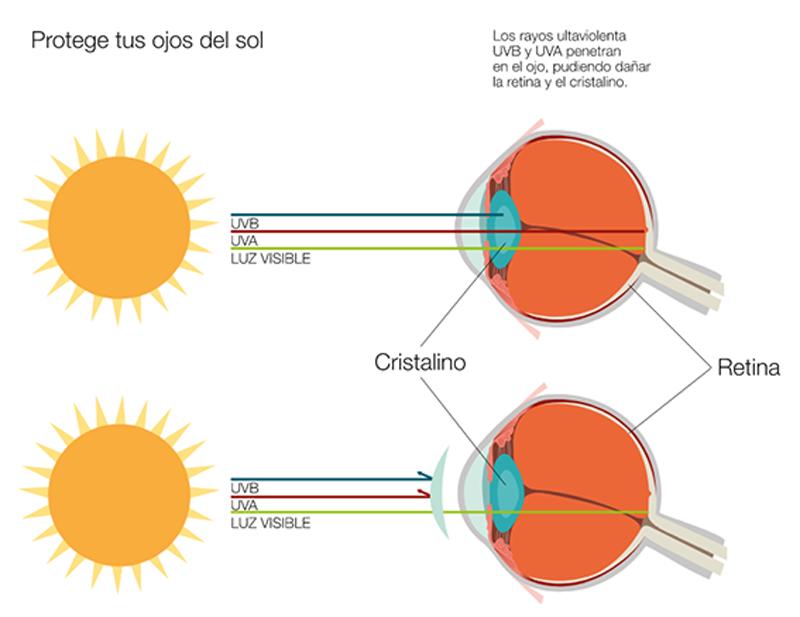 Sol De En PerfectvisionsLa Gafas Variedad Mejor Franquinews Nwk8n0POX